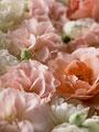 タイトル:バラ