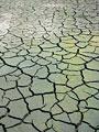 泥田の亀裂