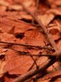 落ち葉と小枝