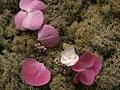 苔とアジサイの花びら