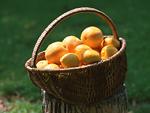 オレンジとレモン