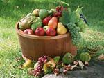 果物いろいろ